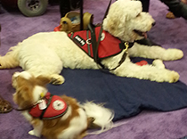 Service dogs were at the meeting