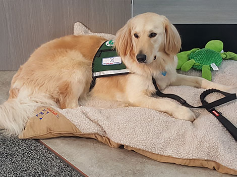 Service dogs at the AES