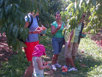 Our team had a lot of fun peach picking