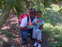 Peach picking experts