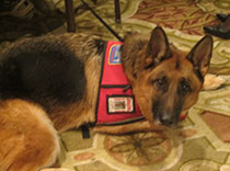 How sweet and loyal is this?  Seizure service dog present